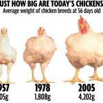 Yuk Konsumsi Telur, si Protein Hewani Padat Gizi