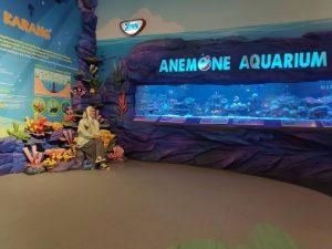 Anemone Aquarium